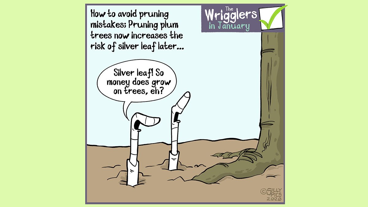 Cartoon about plum silver leaf - money does grow on trees?