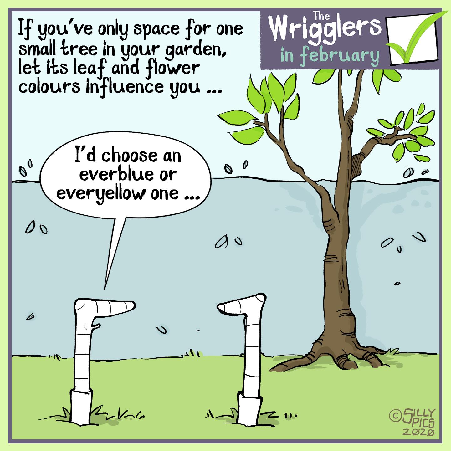 cartoon about choosing an evergreen tree