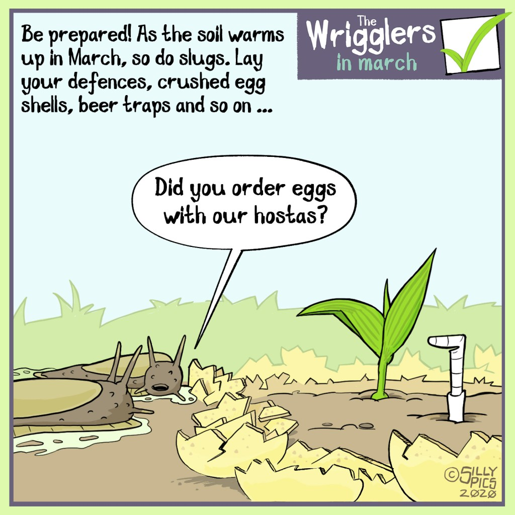 """a cartoon about slugs waking up in march and finding eggshells around their plants – one slug asks, """"did you order eggs with your hosta?"""