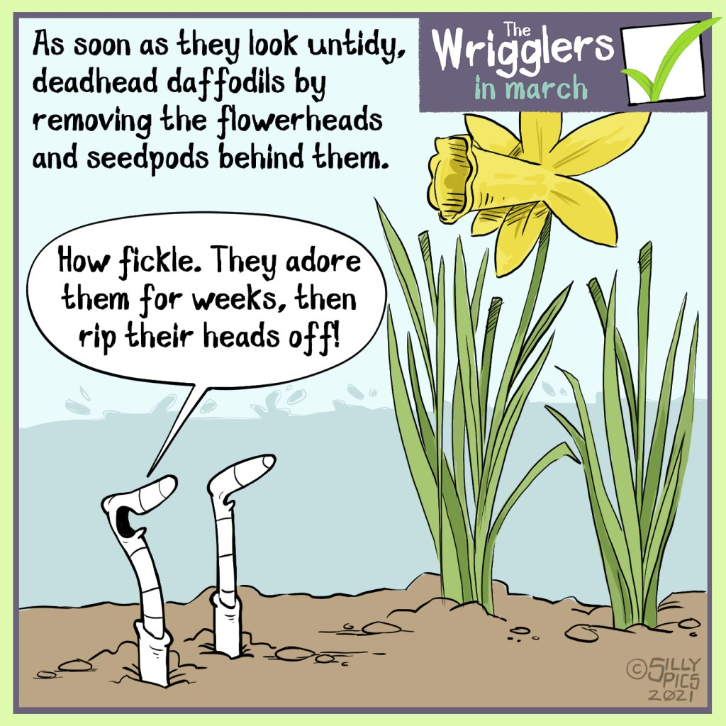 "This a cartoon about deadheading adffodils once they start to set seed. One worm sys"" How fickleThey adore these plants for weeks then rip their heads off"""