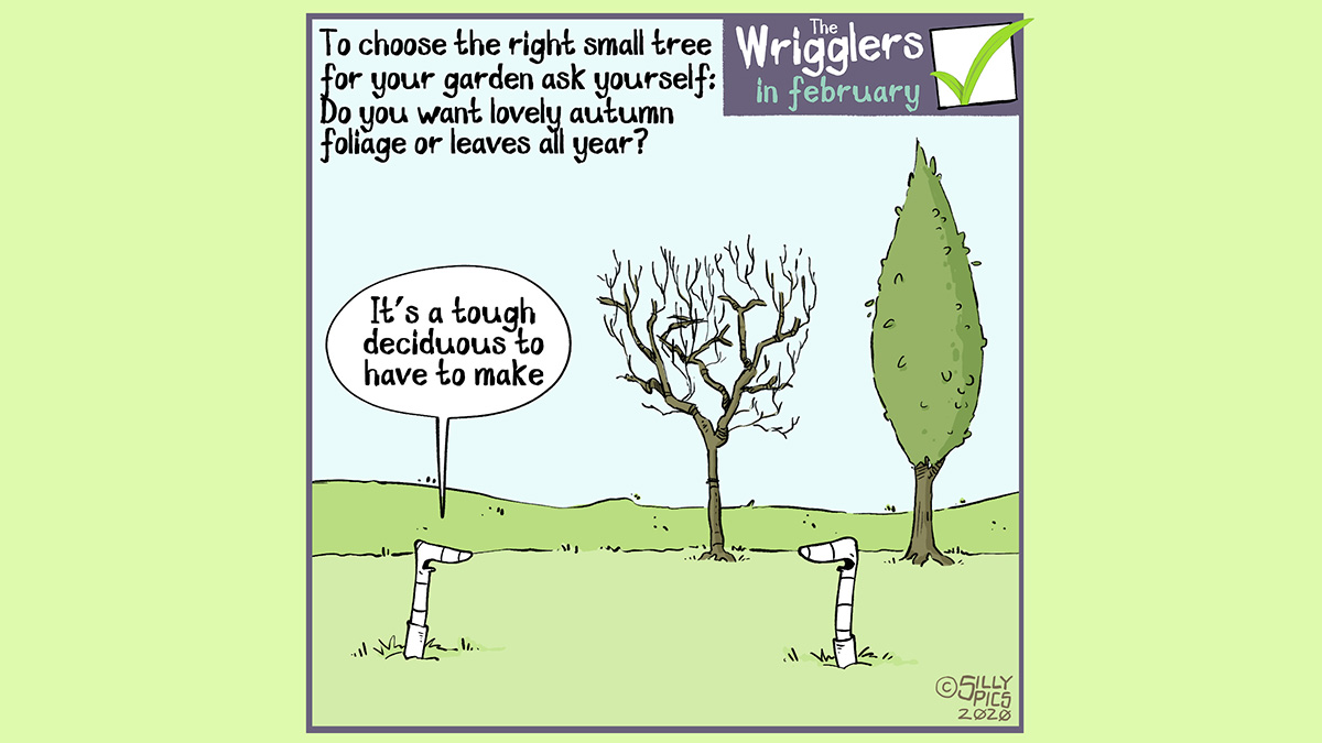 when choosing a tree cartoon, deciduous or evergreen?