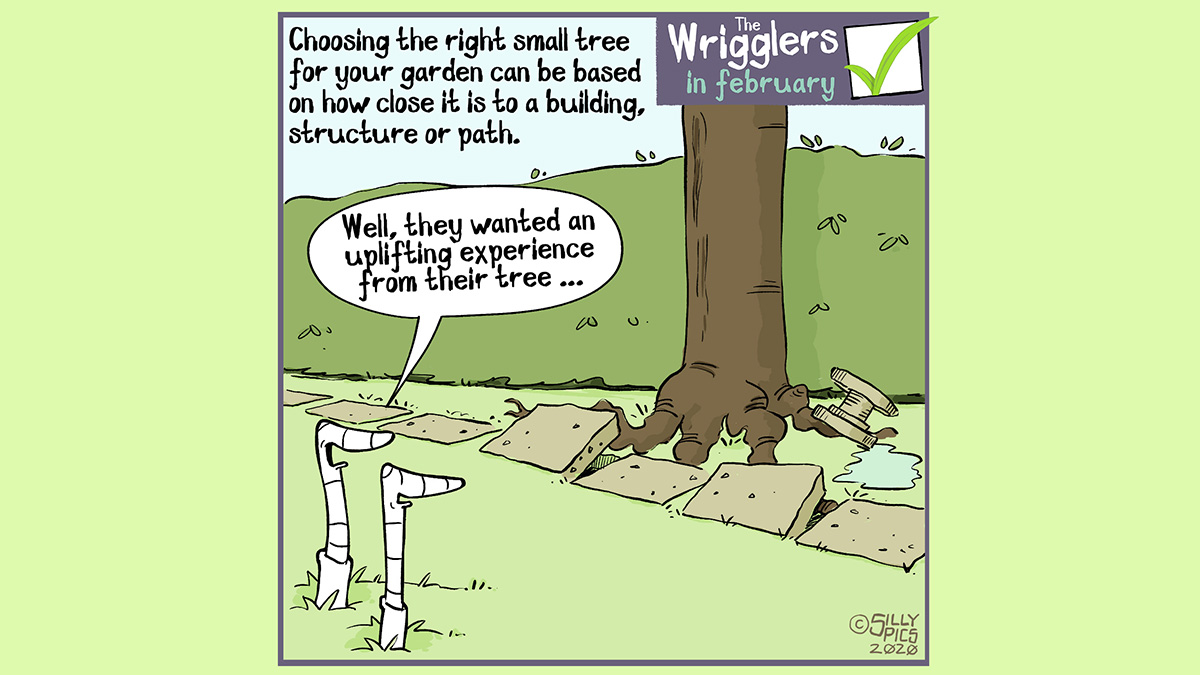 cartoon about choosing trees for your garden, being careful of root growth