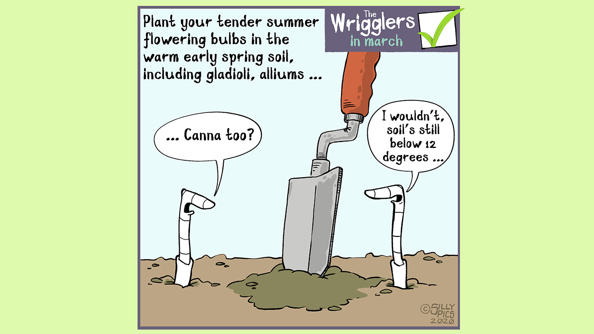 March is a good time to plant your spring flowering bulbs. This a cartoon shares the tip that you should wait til the soil is 12 gerees in telpaerature. One work says to the other worm, canna (meaning the bulb) which the other work replies, only if the soil is 12 degrees or more