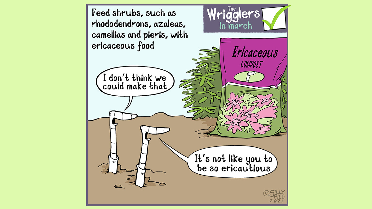 """Some plants like an ericaceous compost. In this cartoon two worms are looking at a bag of ericaceous compost, one says, 'Can we make that?"""" The other work says,we can, don't be so ericautious"""