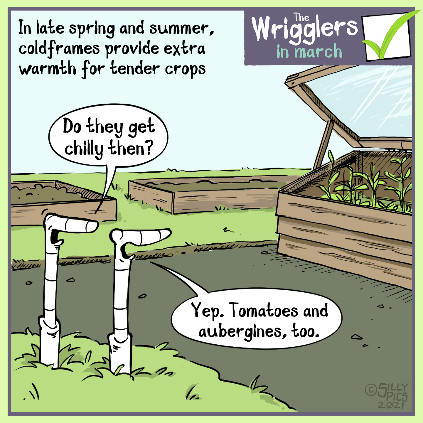 "Cartoon about cold frames being used after the spring hardening off period, and used in the summer on other tender crops to help increase yields. Two worms are looking at a cold frame with some crops in it. One worm says, "" Do they get chilly then?"" The other worm, misunderstanding the question, says"" Yes, Aubergines and tomatoes, too."""
