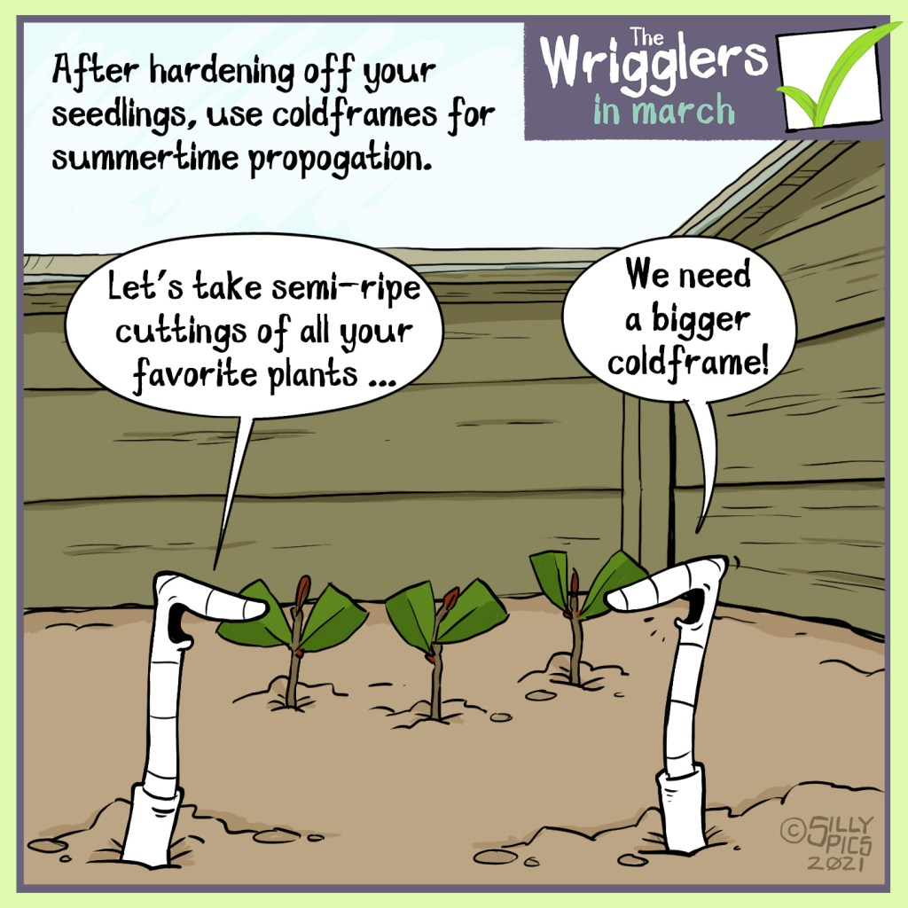 """A cartoon to say that you can use a cold frame for summertime propagation, taking cuttings and growing them in the cold frame. In this cartoon two worms are in the cold frame, one says, """" Let's take semi-ripe cuttings of all your favourite plants."""" The other says, """"we're going to need a bigger cold frame!"""""""