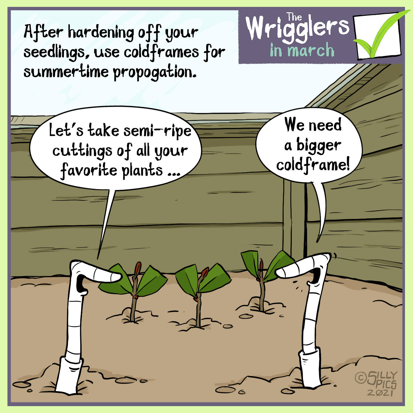 "A cartoon to say that you can use a cold frame for summertime propagation, taking cuttings and growing them in the cold frame. In this cartoon two worms are in the cold frame, one says, "" Let's take semi-ripe cuttings of all your favourite plants."" The other says, ""we're going to need a bigger cold frame!"""