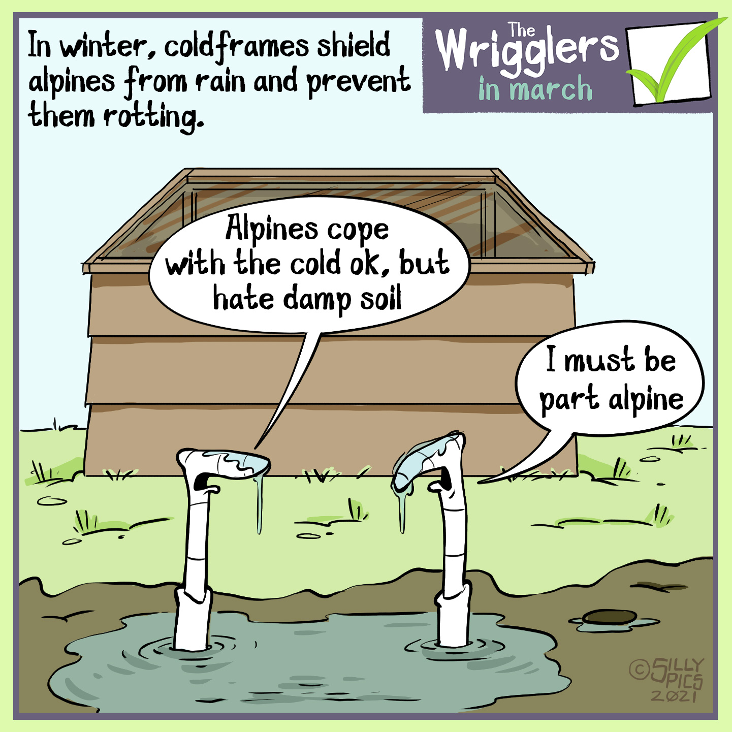 "This cartoon talka bout using a cold frame in the winter months to protect alpines from the cold and wet, damp soil. Two worms are in a muddy waterlogged border, in the background there is a cold frame. One worm says to the other, "" Alpine can cope th the cold, they hate damp soil."" The other worm says, ""I must be part Alpine."""