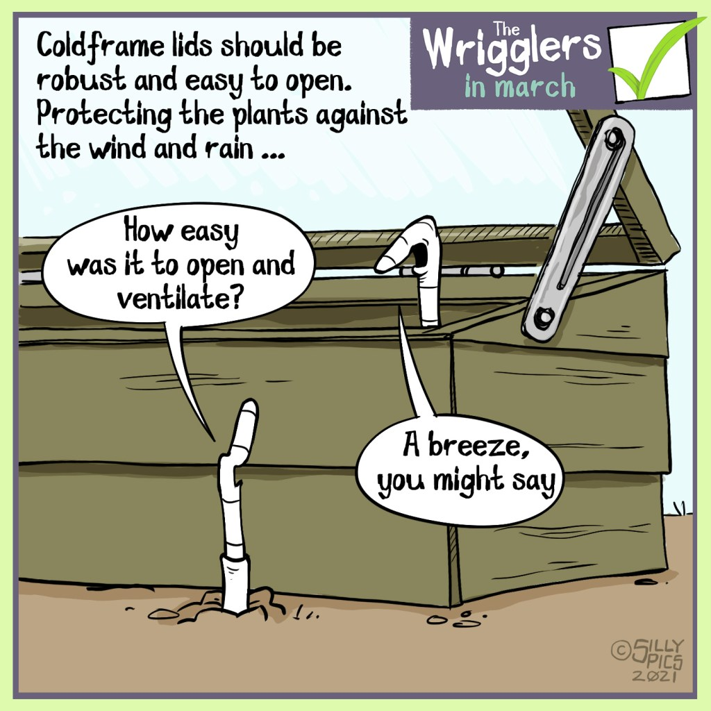 "This cartoon is about cold frames being robust and easy to pen, to best protect plants fronm the wind and rain. Two worms are talking, one is in the ground outside the cold frame, the other is  sitting on the rim of the cold frame, which is open. The worm on the groubnd says, "" How easy was it to open and ventilate?"" The other worm says, ""A breeze, you might say."""