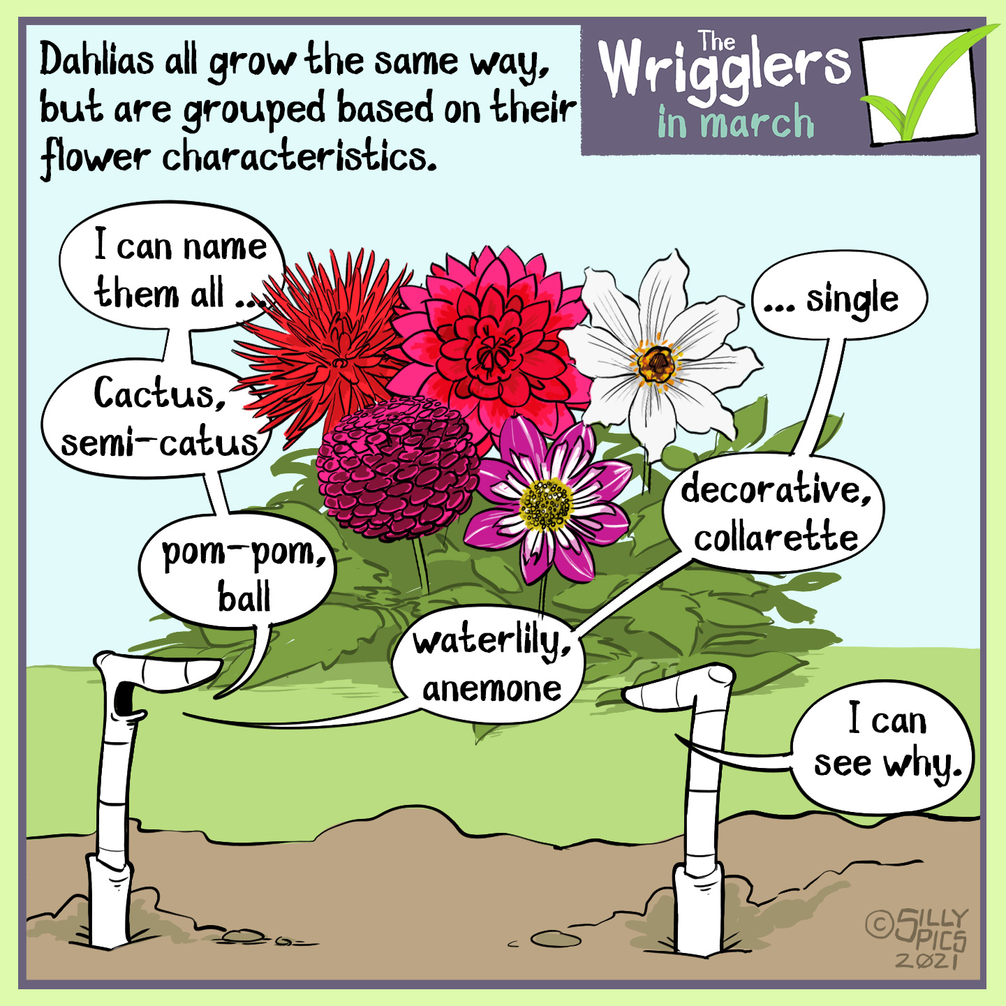 "cartoon about growing dahlias. This cartoon shows too worms looking at a group of different dahlia varieties. One worm say"" I can name every dahlia variety."" he continues, "" Cactus, semi-cactus, pom pom, ball, waterlily, anemone, decorative, colarette … single,"" The other warm, ""I can see why"""