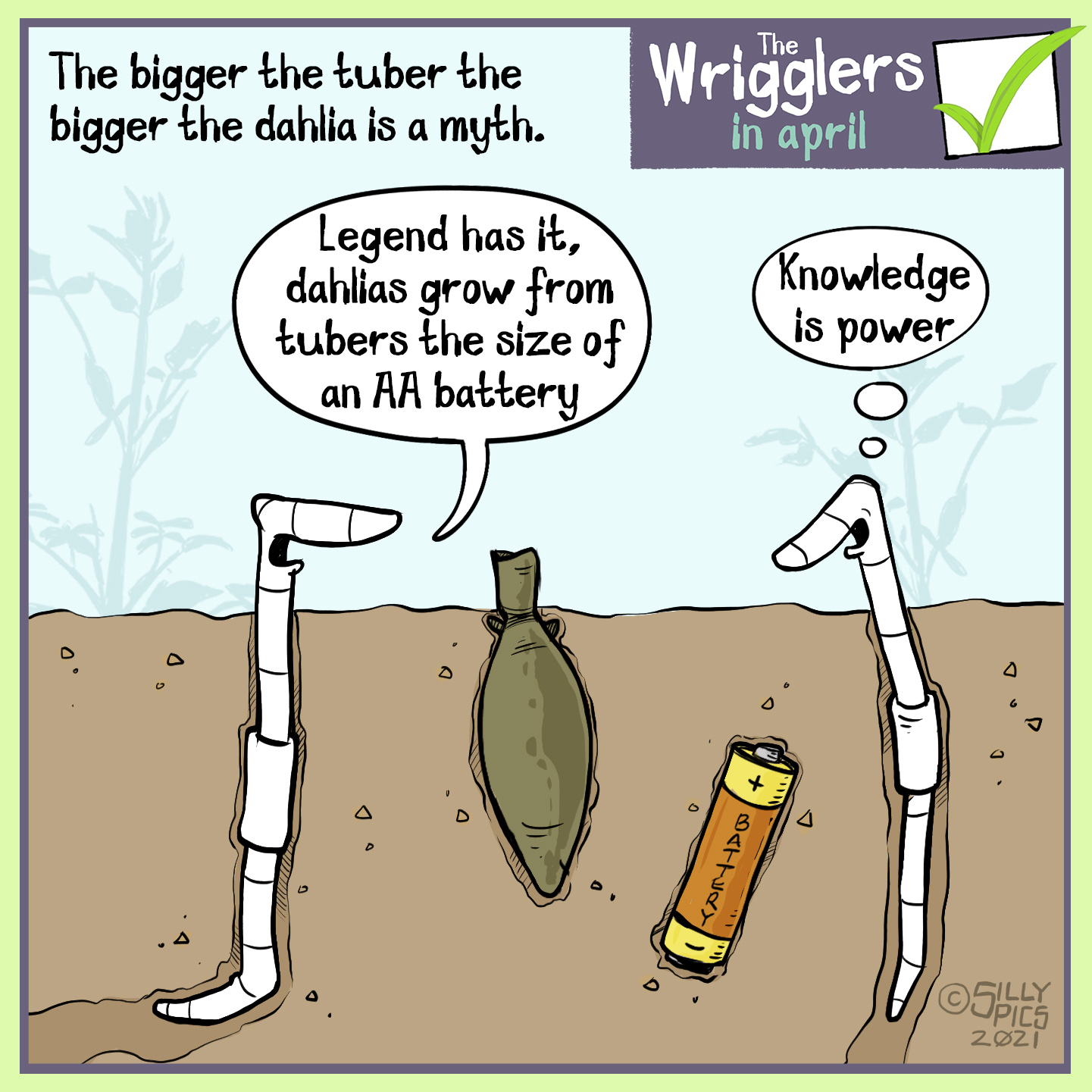 "A cartoon about growing dahlias. This cartoon shows two worms in a border with an area planted with dahlia tuber. In the soil next to the tuber is a random AA battery.The copy reads: The bigger the tuber the bigger the dahlia is a myth. One worm says to the other worm"" Legend has it you can plant tubers from the size of an AA battery"" The other warm thinks to itself, ""Knowledge is power"""