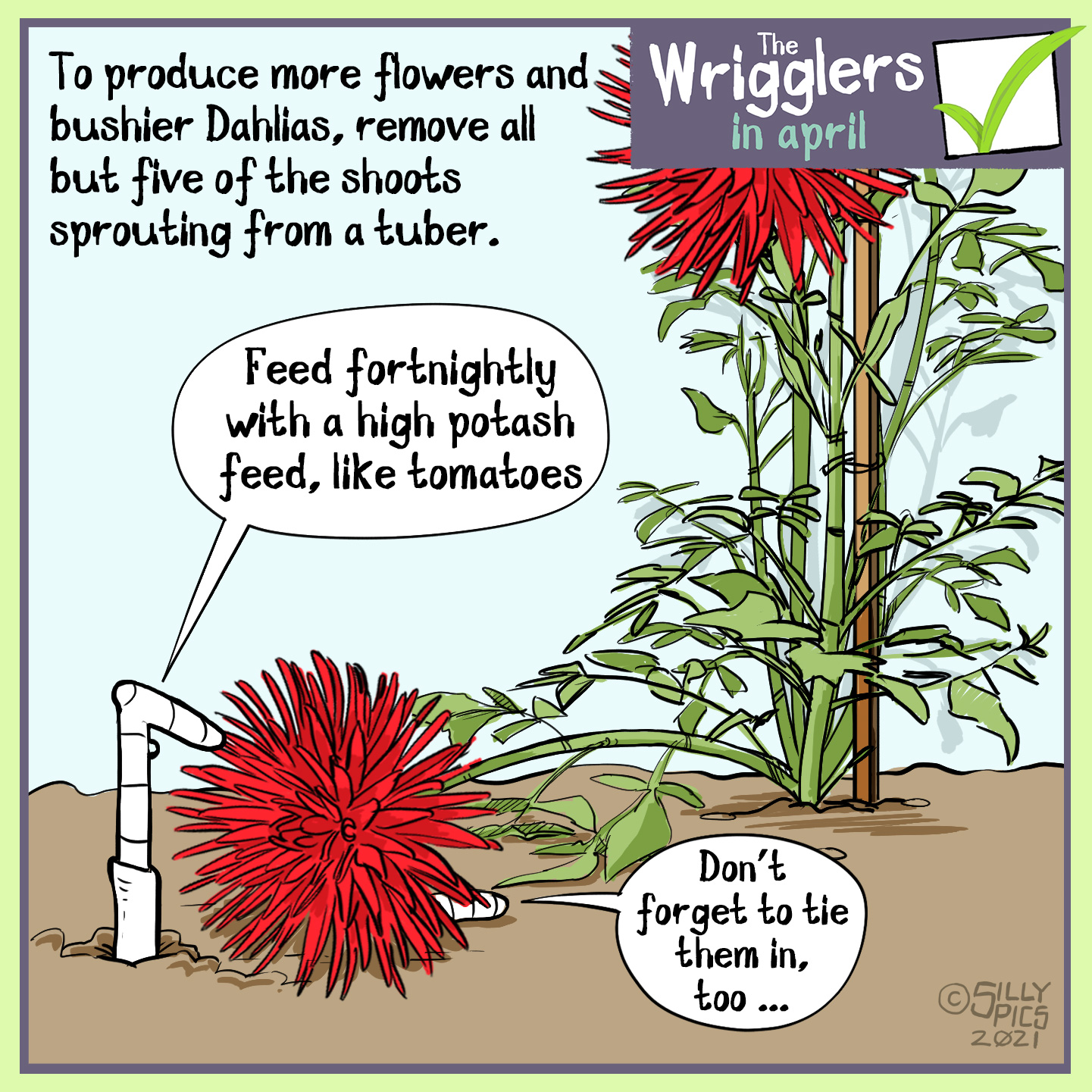 "A cartoon about growing dahlias. This cartoon shows two worms in a border with a dahlia plant. On elf the flowers has fallen over and is lying on top of one of the worms.. The copy reads: To produce more flowers and bushier Dahlias' remove all but five of the shoots sprouting from a tuber. One worm says to the worm under the flower"" Feed fortnightly with a high potash feed, like tomatoes"" The other worm says, ""Don't forget to tie them in too"""