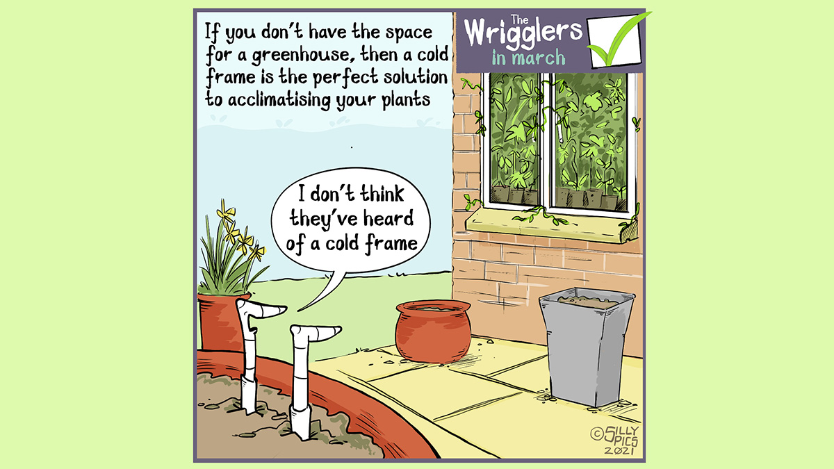 """A Wrigglers' cartoon about using a coldframe to acclimatise plants. The image is of a house window packed full of plants, the tedrils of the plants are creeping through the window seals . The two worms in a pot outside, one says, """"I don't think they have heard of a cold frame."""