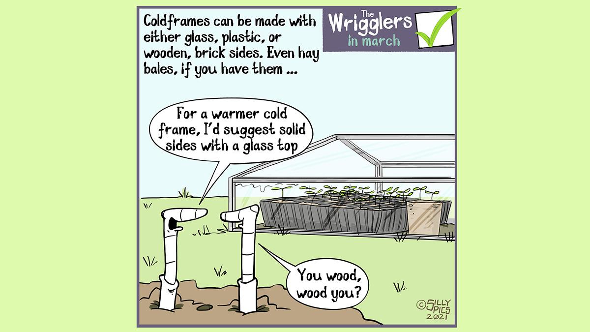 "The cartoon shows two worms outside a coldframe made of aluminium and glass. The copy reads, Coldframes can be made from metal, platic, glass, brick, wood or even haybales. One worm says, ""For a warmer coldframe I suggest using solid side with a glass top use wooden"". The other worm replies, ""you wood, wood you."""