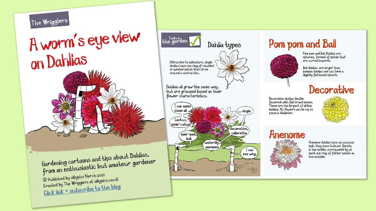 front cover of pdf - a worm's eye view on dahlias. This pdf covers the types of dahlias you get and advice on growing them from seed, tuber through. Sharing common knowledge and advice on supporting the plants to produce flowers all summer long