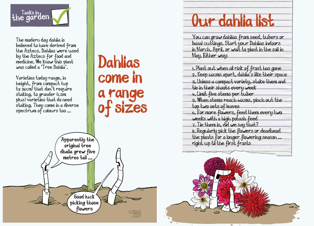 pdf double page spread talking about the range of sizes dahlias come in, with a  dahlias to do list