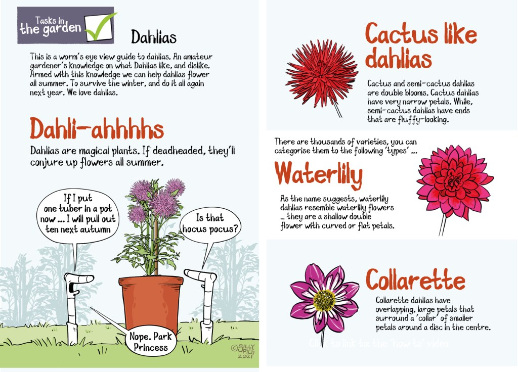 double page spread on dahlias and types of dhalias