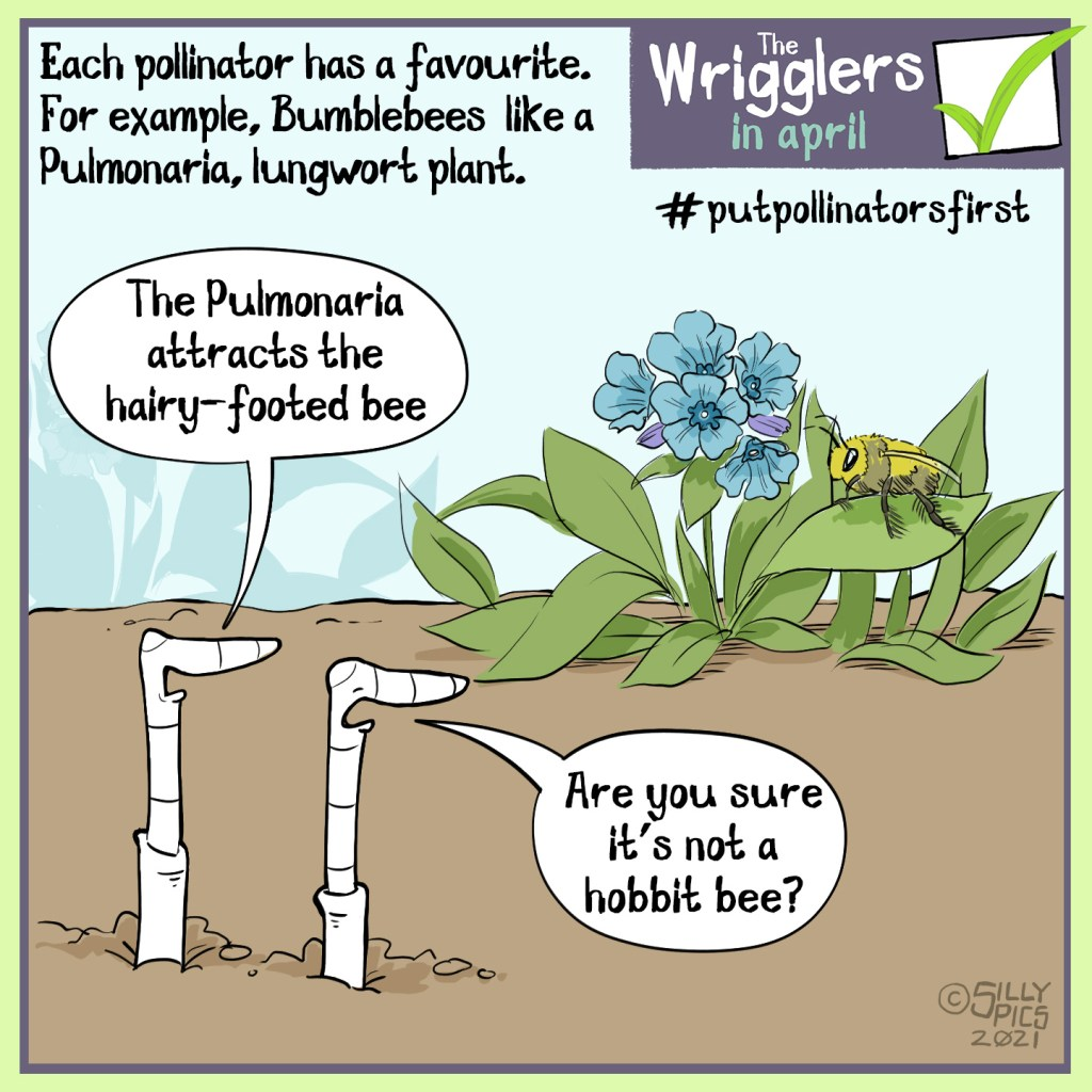 """gardening cartoon from the wrigglers about #putpollinatorsfirst - Each pollinator has a favourite plant, for example the hairy footed bumble bee likes the pulmonary, lungwort plant. In this cartoon one bee is talking to the other while looking at a lungwort plant with a hairy footed bee on it. One work says, """"the pulmonary attracts the hairy footed bee"""" The other work says, """"are you sure that's not a hobbit bee?"""""""