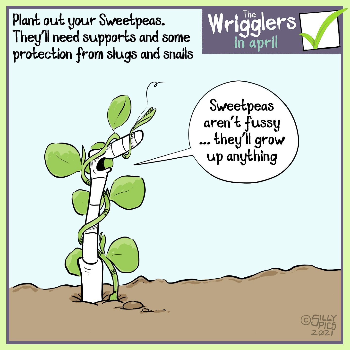 """Plant out your sweet peas, they're hardy enough to withstand a light frost … but will need protection from slugs and snails In this cartoon a worm is upright in the soil with a sweetie twisted around it as if it was a support. The work says: """"sweetpeas aren't fussy, they'll grow up anything"""""""