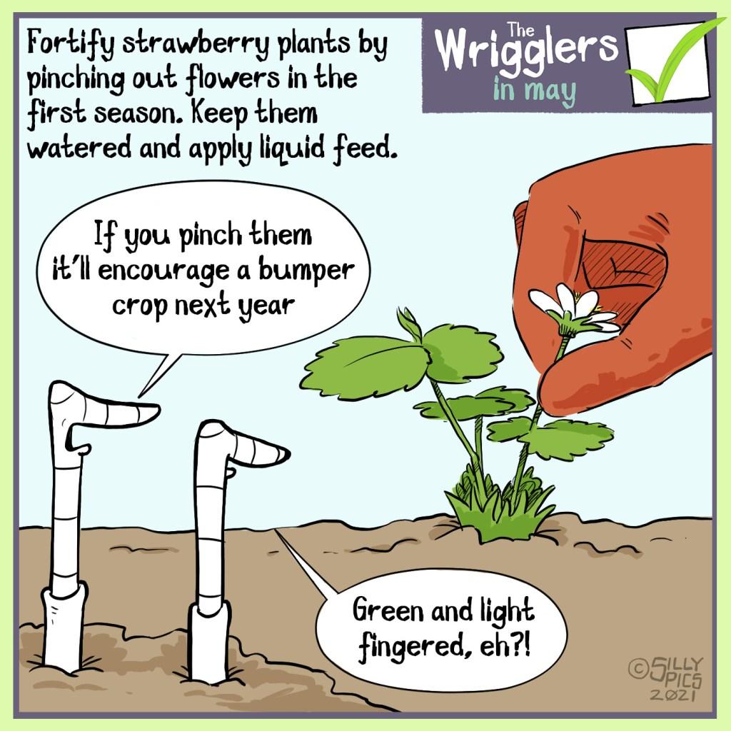 cartoon about pinching new strawberry plants