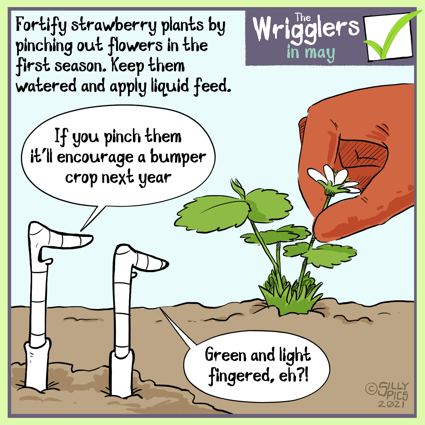 """Fortify new strawberry plants by pinching out the flowers in their first season. Keep them well watered and apply liquid feed. The cartoon is of two worms watching a gloved hand pinch out a strawberry flower head. One worm says, """" If you pinch them it'll encourage a bumper crop next year."""" The other worm replies,""""Green and light fingered, eh?!"""""""