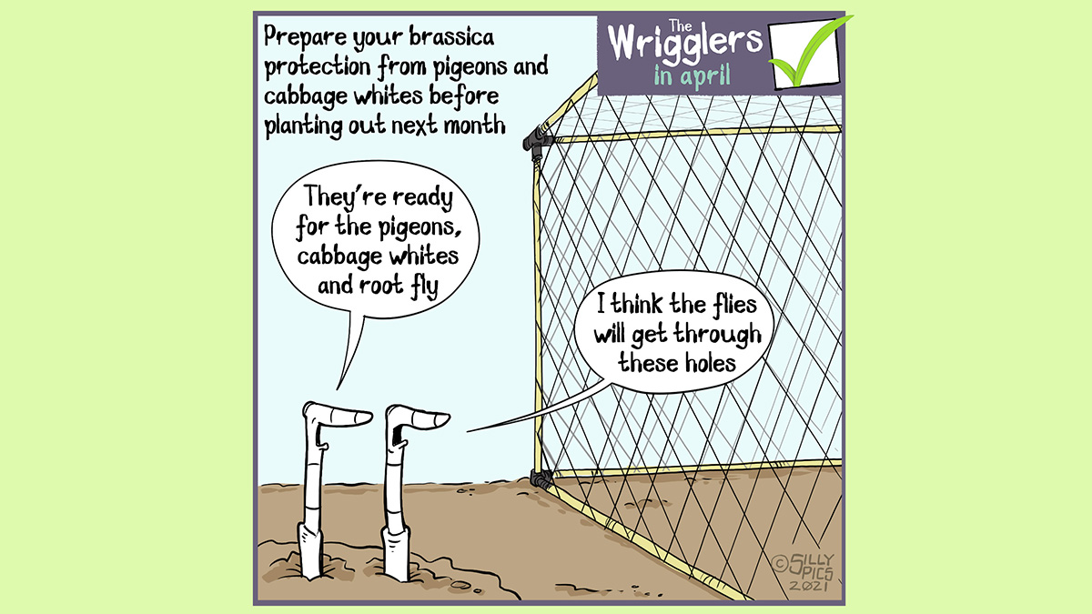 """Prepare your brassica protection from pigeons and cabbage whites before planting them out later in May. The cartoon shows two worms in front of a netted cage. One worm says, """"They're ready for the pigeons, cabbage whites and root fly … """" The other worm replies, """" I think the flies will get through those holes"""""""