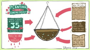 A cross section of a hanging basket. Arows pointing to the relevant parts with suggestions 1. select a basket with a diameter of 35cm or more 2. pierece the liner for drainage 3. Mix your container soil with slow release fetiliser and water retaining gel – follow the quantity on the nmanufacturers instructions 4.Drop the soil level so the when watering it doesn't simply roll off the top of the basket 5. addd a dip, so theat the water flows into the basket, and again not staright out of the sides