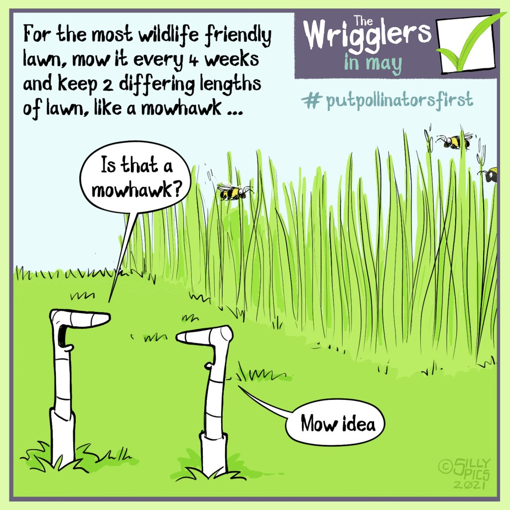 """#putpollinatorsfirst cartoon about mowing your lawn. The cartoon says: For the most wildlife friendly lawn, mow it every 4 weeks and keep two differing lengths of lawn, like a mohawk … Two worms are looking at a wall of long grass, where there is some insect pollinator activity. One work says to the other worm, """" Is that a mohawk?"""" The other warm says, """"mow idea"""""""
