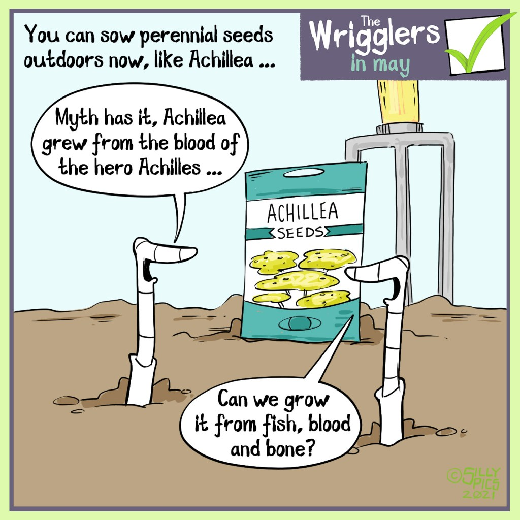 """The headline says, """" You can sow perennial seeds, like Achillea, outdoors now."""" The cartoon shows two worms looking at some Achillea seeds, propped up against a fork. One work says to the other,"""" Myth has it, Achilles grew from the blood of the hero Achiiles …"""" The other work says, """" Can we grow it from fish, blood and bone?"""""""