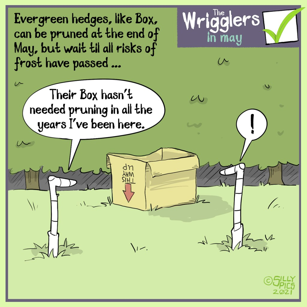 """The cartoon headline says, """"Evergreen hedges, Like Box, can be pruned at the end of May, but best to wait until all risk of frost has passed."""" Two worms are looking at a cardboard box, in front of a hedge. One worm says to the other, """" Their Box hasn't needed pruning in all of the years I've been here."""""""