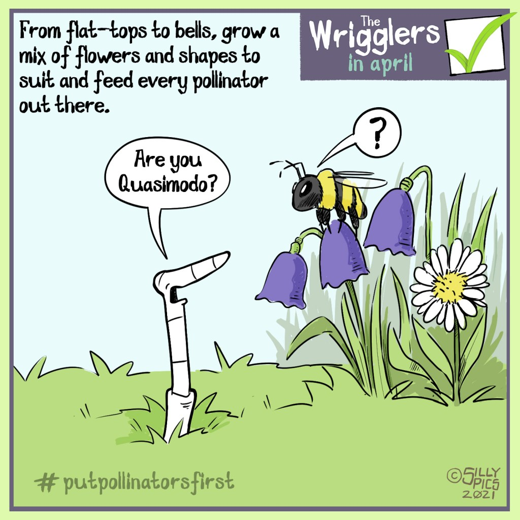 """The cartoon headline says, """"From flat tops to bells, grow a mix of flowers and shapes to suit and feed every type of pollinator out there … The cartoon shows a bee on top of a bell shaped flower.  A worm asks the bee, """" Are you Quasimodo?"""" The bee looks puzzled and, says, """"?"""" #putpollinatorsfirst"""