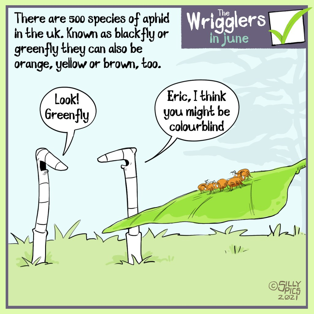 """The cartoon headline says, """"There are 500 species of aphid in the UK. Known as blackly or greenfly they can also be orange, yellow and brown, too. In the cartoon two worms are looking a leaf with orange 'greenfly' o it. One work says to the other one, """"Look! Greenfly"""" The other work says, """"Eric, I think you might be colourblind"""""""