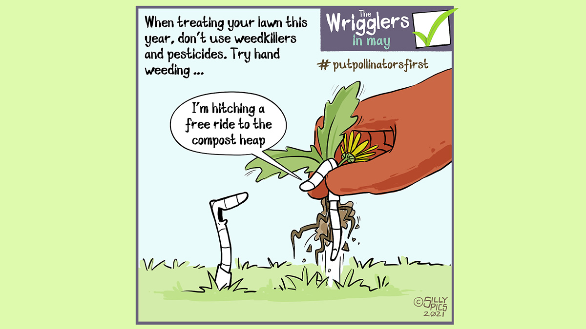 """#putpollinatorsfirst cartoon about mowing your lawn. The cartoon says: When trading your lawn this year, don't use weedkillers and pesticides. Try hand weeding … The image is … a worm being lifted from the ground with a dandelion weed, hand weeding. The worm says to another worm on the ground, """"I'm hitching a free ride to the compost heap"""""""