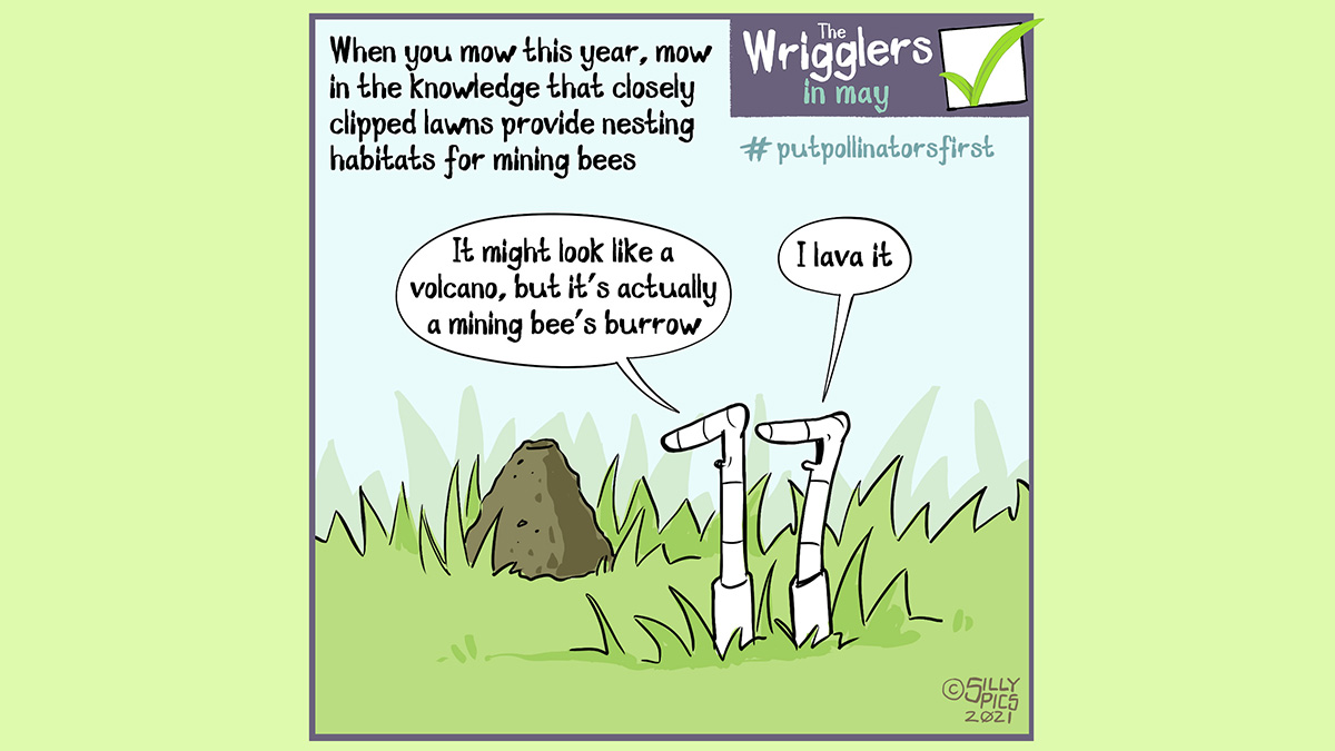 """#putpollinatorsfirst cartoon about mowing your lawn. The cartoon says: When you mow this year, mow in the knowledge that closely clipped lawns provide nesting habitats for mining bees. The cartoon shows two worms looking at a ming bee burrow on the lawn. One worm says, """"It might look like a volcano, but it's actually a ming bee's burrow."""" The other worm says, """"I lava it"""""""