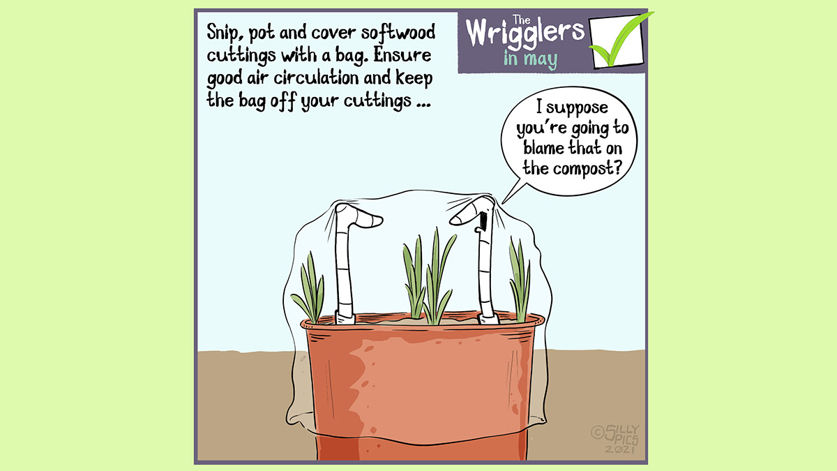 """Snip, pot and cover softwood cuttings with a bag. Ensure good air circulation and keep the bag off your cuttings … The image shows two worms in a pot with cuttings, it is covered with a plastic bag … the two worms are supporting the plastic bag to keep it off the cuttings. One worm says to the other worm, """"I suppose you're going to blame that smell on the compost?"""""""