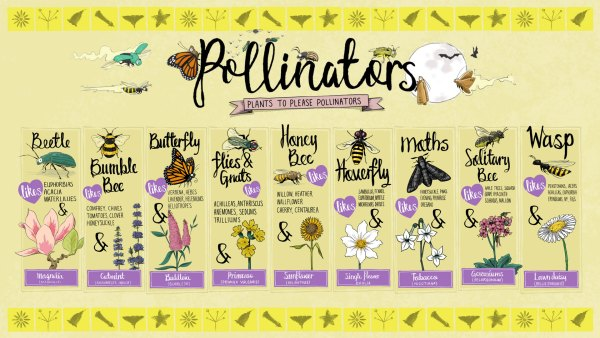 A screensaver showing nine pollinating insects and some of their go to favourite plants and flowers