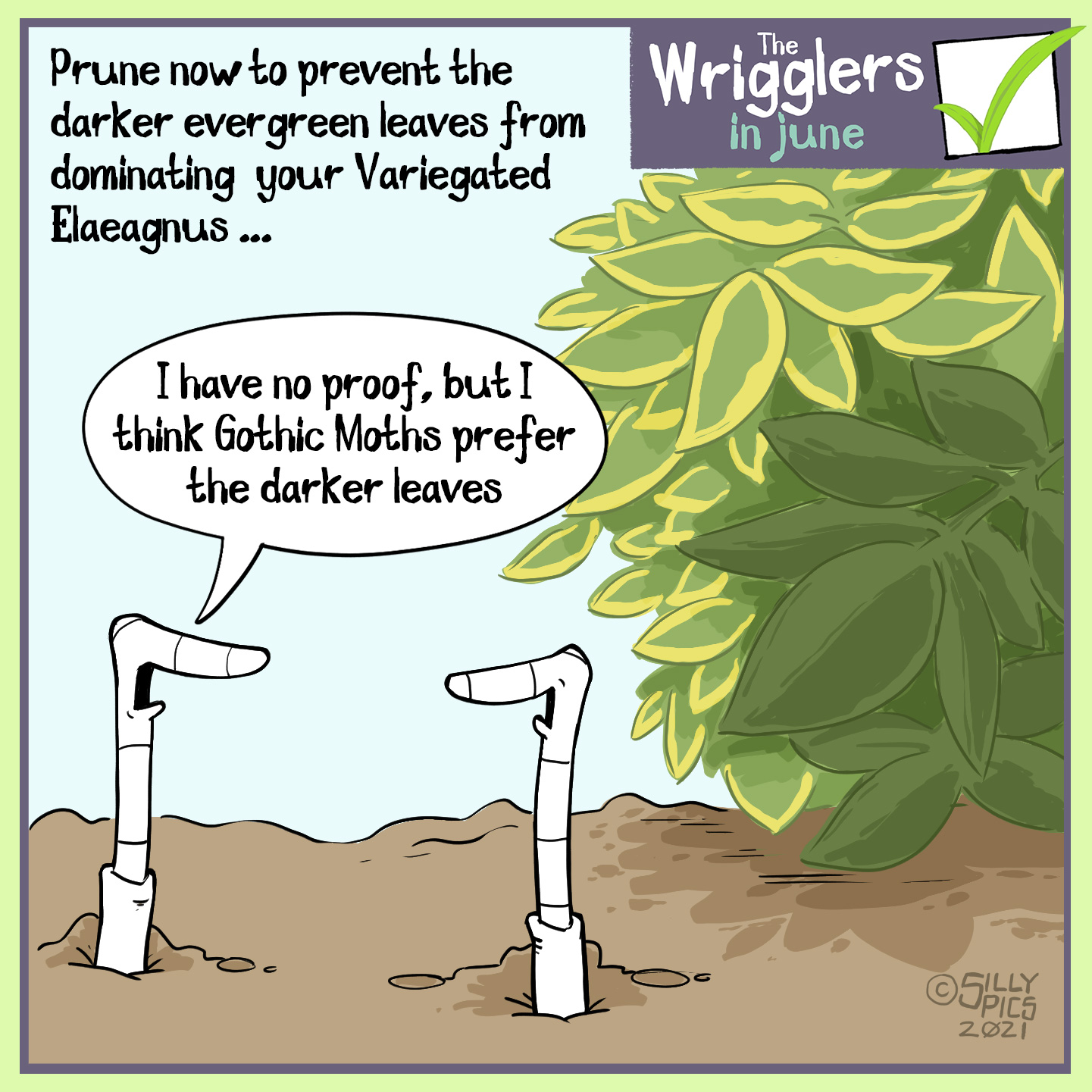 """The cartoon reads, Prune now to prevent the darker evergreen leaves from dominating your variegated Elaeagnus The cartoon is of two worms in front of an elaeagnus bush, one of the leaf stems is dark green the others are variegated …. One worm says to the other worm,""""I have no proof, but I think Gothic Moths prefer the darker leaves."""""""