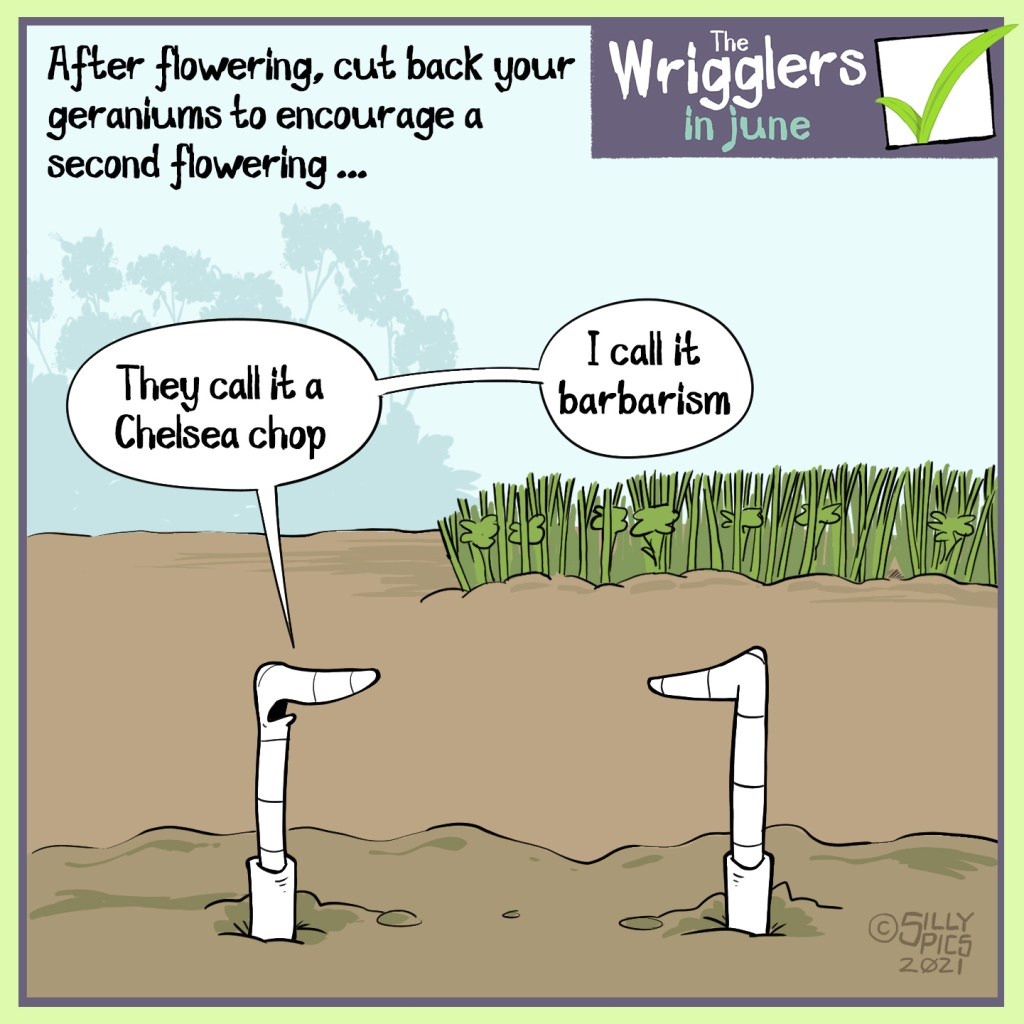 """The cartoon reads, After flowering, cut back your geraniums to encourage a second flowering  The cartoon is of two worms in front of a geranium that has been cut down to the ground. One worm says to the other, """" they call it a chelsea chop, I call it barbarism."""""""