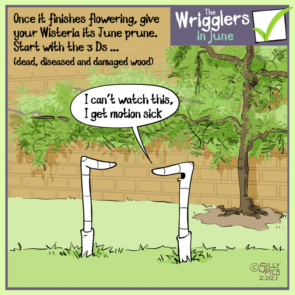 """The cartoon reads, Once it finishes flowering, give your Wisteria its June prune. Start with the 3D  (dead, diseased and damaged parts of the plant)  One worm faces away from the Wisteria, it says' """"I can't watch this, I get motion sick"""""""