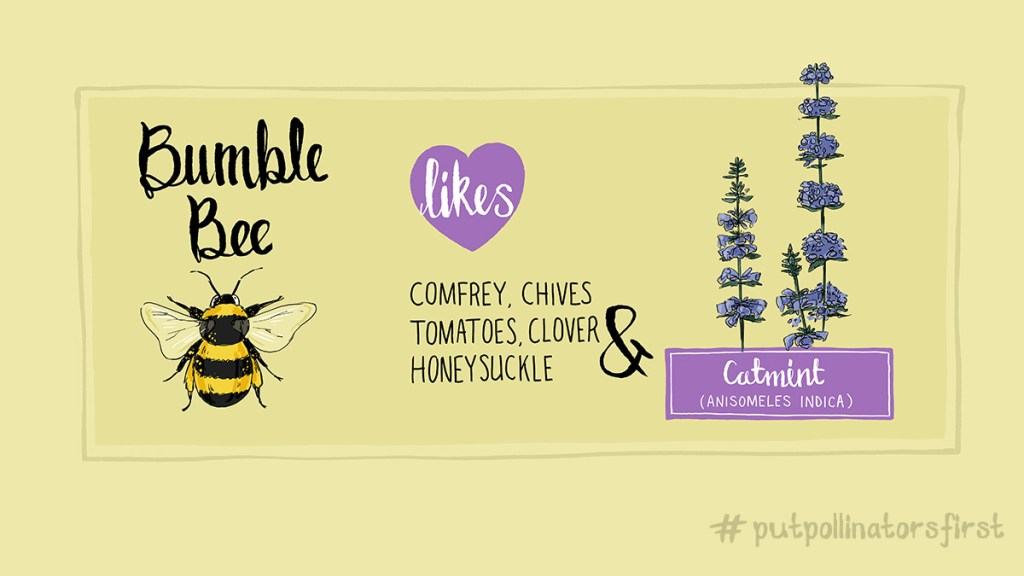 #putpollinatorsfirst poster showing the plants that beetles like to pollinate #comfrey #chives #honeysuckle #tomatoes #clover #catmint