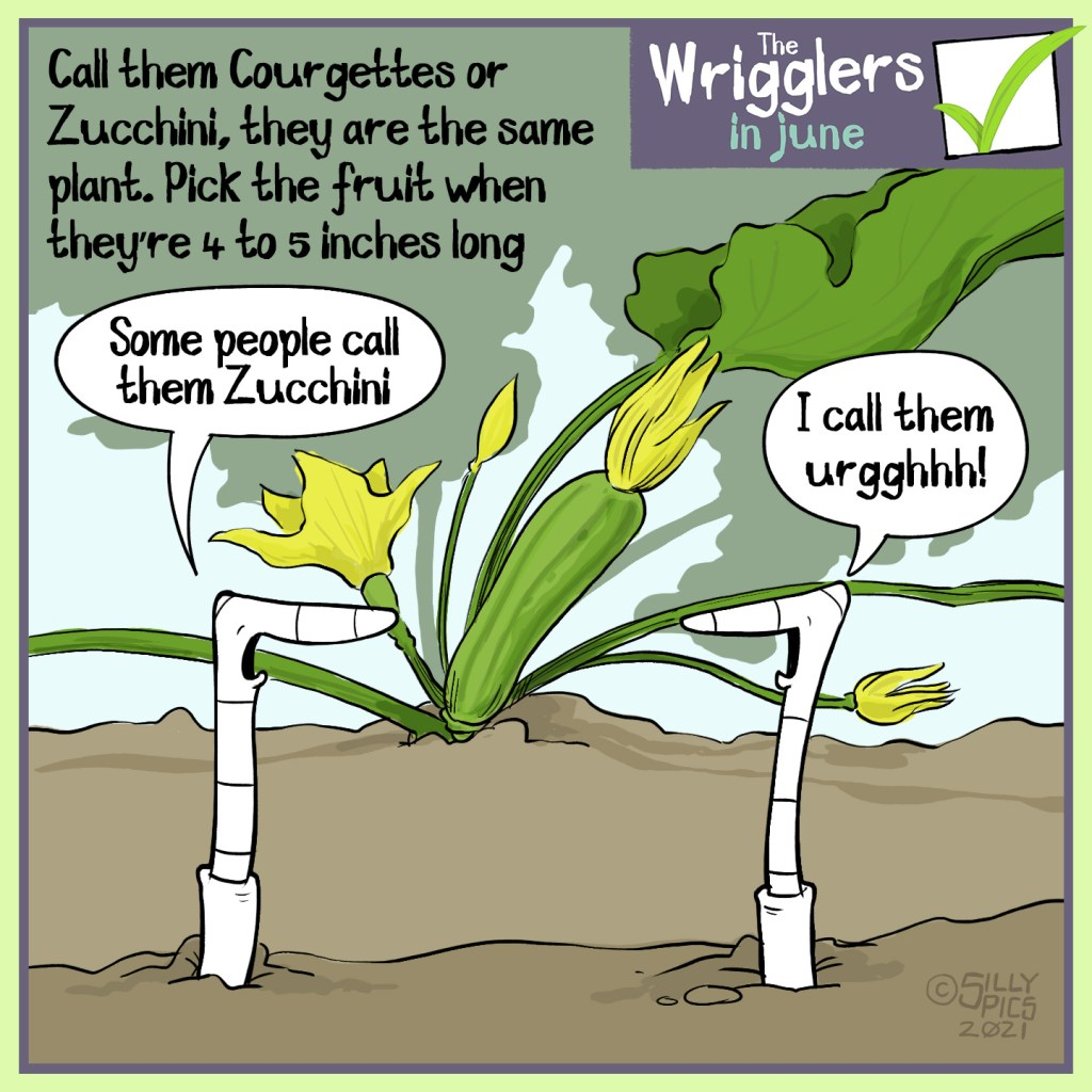 """The cartoon reads, Call them courgettes or Zucchini, they are the same plant. Pick the fruit when they're 4 to 5 inches long The cartoon is of two worms in front of a flowering courgette plant. One worm says, """" Some people call them Zucchini …"""""""" The other worm replies, """"I call them urggh!"""""""