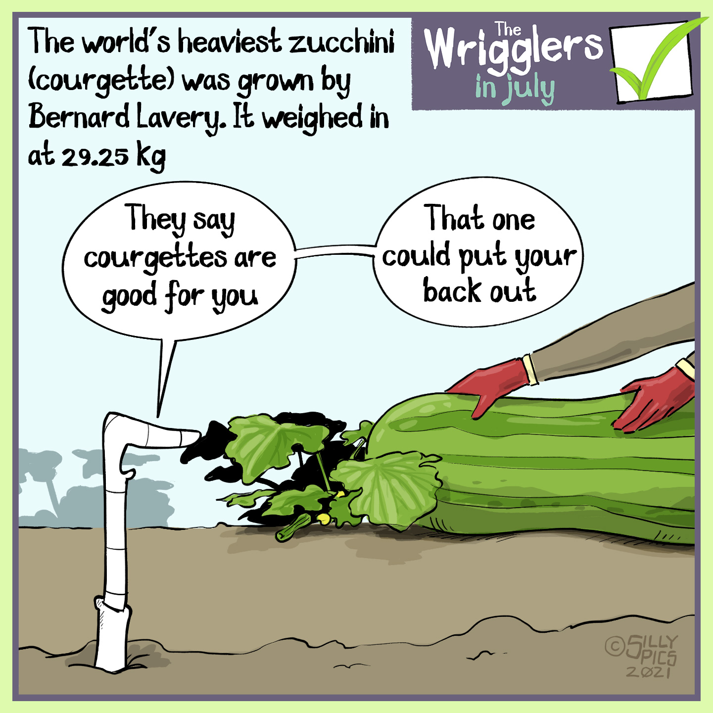 """The cartoon reads, The world's heaviest zucchini (courgette) was grown by Bernard Lavery. It weighed in at 29.25 kilograms The cartoon is of one worm in front of a very large large and heavy looking fruit being picked - the fruit is five times thicker than the persons arms picking it. The worm says, """" They say courgettes are good for you … That one could put your back out"""""""