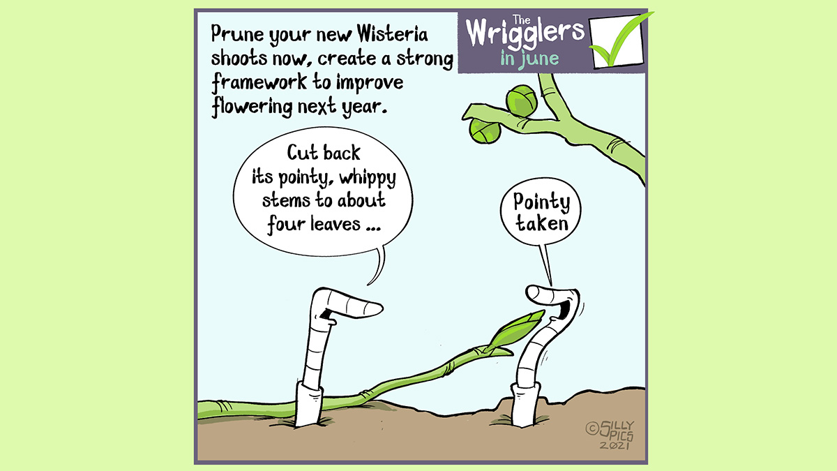 """The cartoon reads, Prune your wisteria now, create a strong framework to improve flowering next year. One worm has one of the pruned pointy bits pointing at it. The other worm says to the worm, """"Cut back its pointy, whip stems about four leaves."""" The worm with the pointy pruned stem in its face says, """"pointy taken"""""""