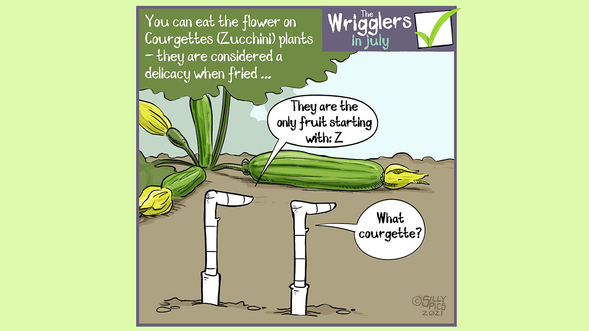"""The cartoon reads, You can eat the flower on Courgettes (Zucchini) plants, they are considered a delicacy when fried The cartoon is of two worms in front of a flowering courgette plant. One worm says, """" They are the only fruit starting with the letter Z"""""""" The other worm replies, """"what courgette?"""""""