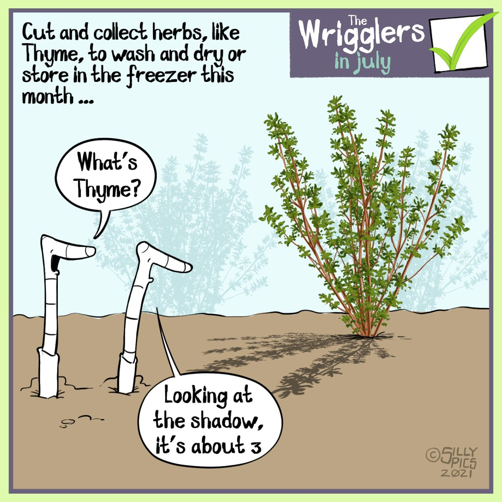 """Cut and collect herbs, like Thyme, to wash and dry,  store in the freezer or make pesto with this month …  Two worms are looking at a thyme plant, one worm says, """" What's Thyme? …""""  The other worm says, """"Looking at the shadow, it's about 3 """""""
