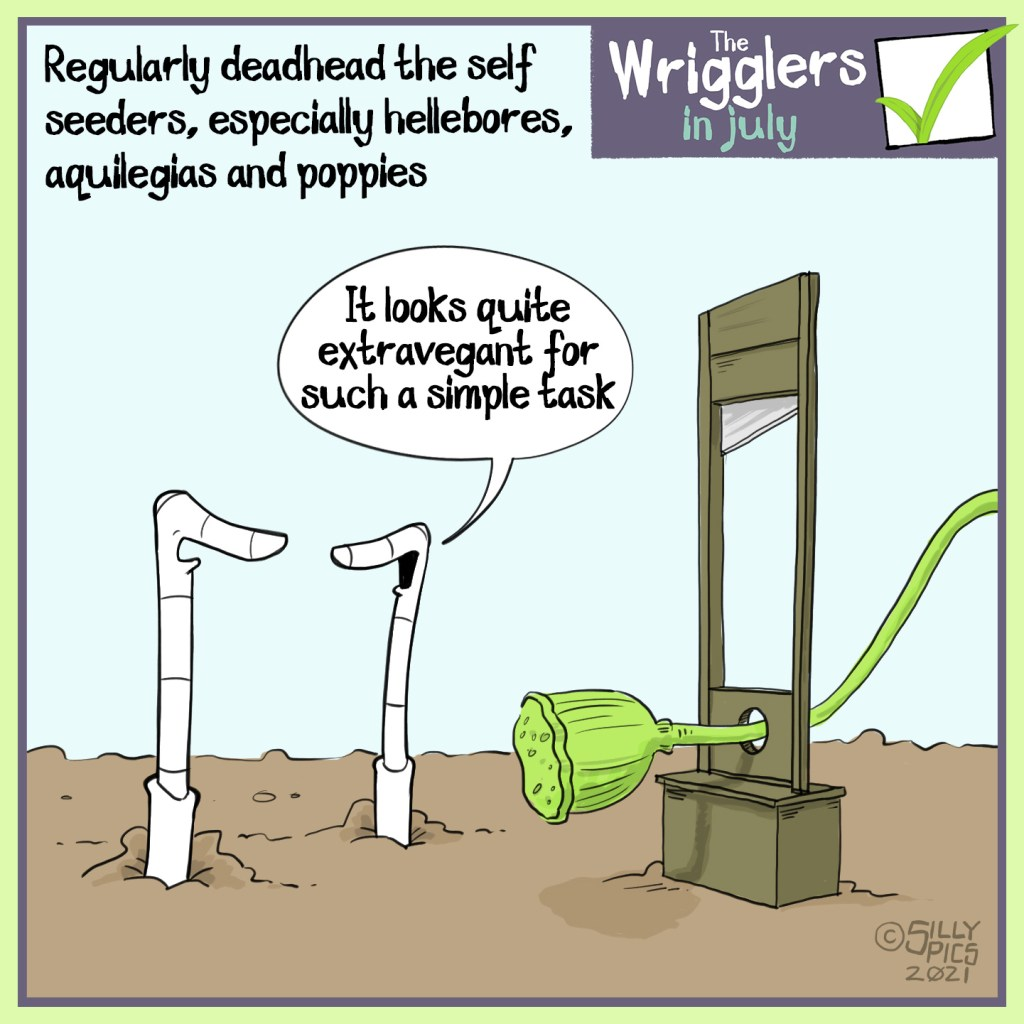 """Above the wrigglers gardening cartoon it reads: Regulalry deadhead the self seeders, especiallyhellebores, aquilegias and poppies The cartoon depicts two worms standing next to a guillotine style contracttion with a poppy seed head ready for the chop. One worm says, """"It looks quite extravagant for such a simple task"""""""