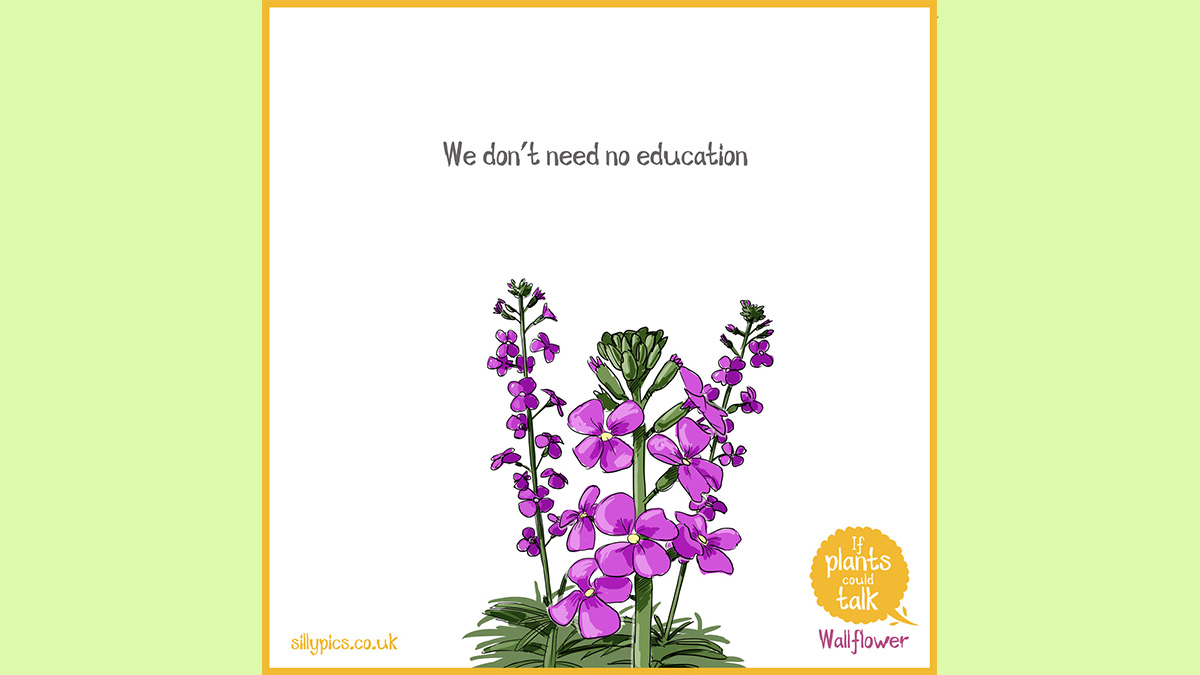 """This is a If plants could talk cartoon. The cartoon shows a Wallflower It says """"We don't need no education"""""""