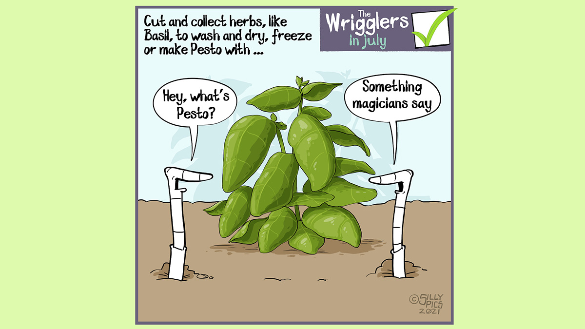 """Cut and collect herbs, like Basil, to wash and dry, store in the freezer or make pesto with this month … Two worms are looking at a Basil plant, one worm says, """" Hey, what's Pesto? …"""" The other worm says, """"Something magicians say"""""""