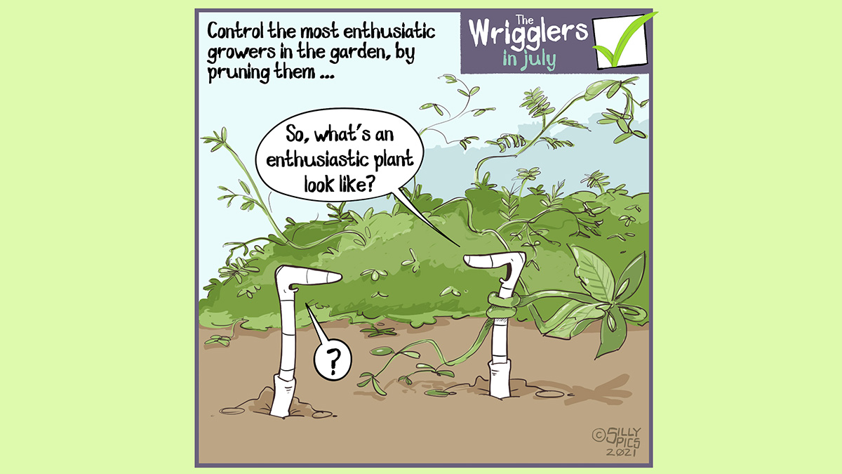 """Above the wrigglers gardening cartoon it reads: Control the most enthusiastic growers in the garde, by pruning them ... The cartoon depicts two worms standing in front of an enthsiatic plant. The plant new growth is leggy and some is wrapped around one of the worm's throat. The worm with the tendril wrapped around its throat says, """"So, what's an enthusiastic plant look like? """" The other worm looks on with disbelief, it says """"?"""""""