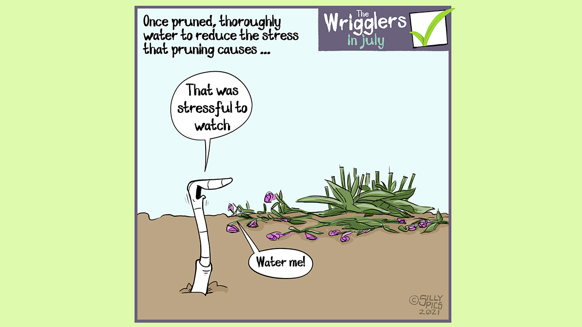 """Above the wrigglers gardening cartoon it reads: Once pruned thoroughly water to reduce the stress that pruning causes the plant The cartoon depicts a worm standing in front of a recently pruned plant. The clippings are on the ground, littered around the plant. The worm says, """"That was stressful to watch"""" Then goes on to say, """"Water me ..."""""""
